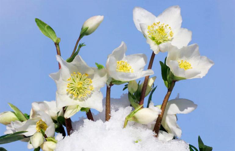 plantes-d'hiver